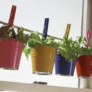 organicheskiy-sad-na-balkone-03